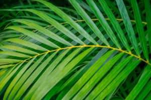botanical, abstract, green, leaf, palm, photograph, nature