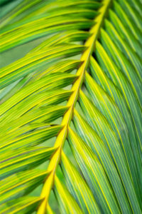 botanical, abstract, green, leaf, palm, photograph, nature, lime green
